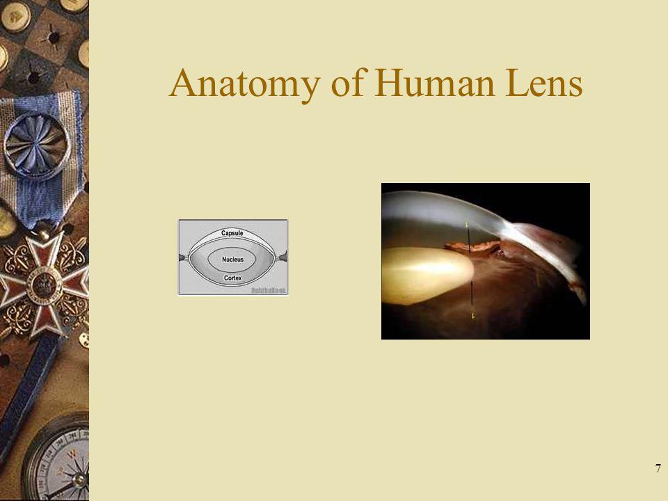 Anatomy of Human Lens 7