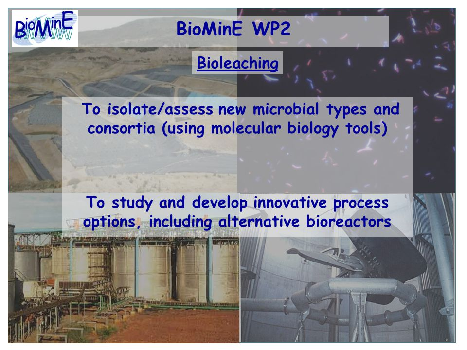 BioMinE WP2 To isolate/assess new microbial types and consortia (using molecular biology tools) To study and develop innovative process options, including alternative bioreactors Bioleaching