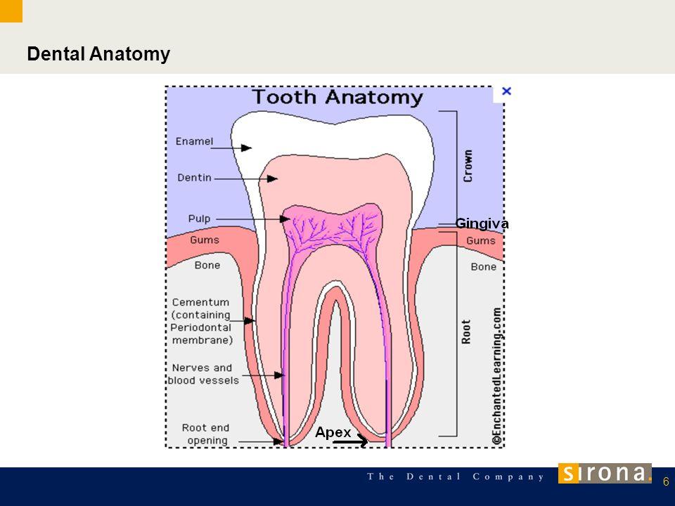 Intraoral imaging: 7 Periapical image: Bitewing: (interproximal) Health of teeth, roots, bone.