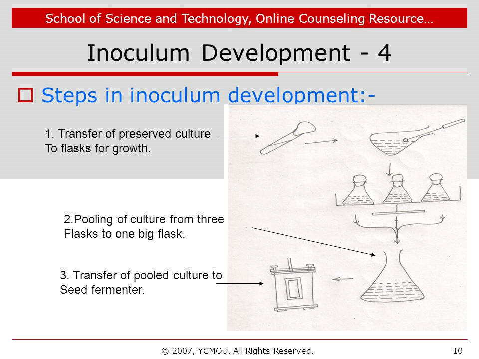School of Science and Technology, Online Counseling Resource… © 2007, YCMOU. All Rights Reserved.10 Inoculum Development - 4 Steps in inoculum develop