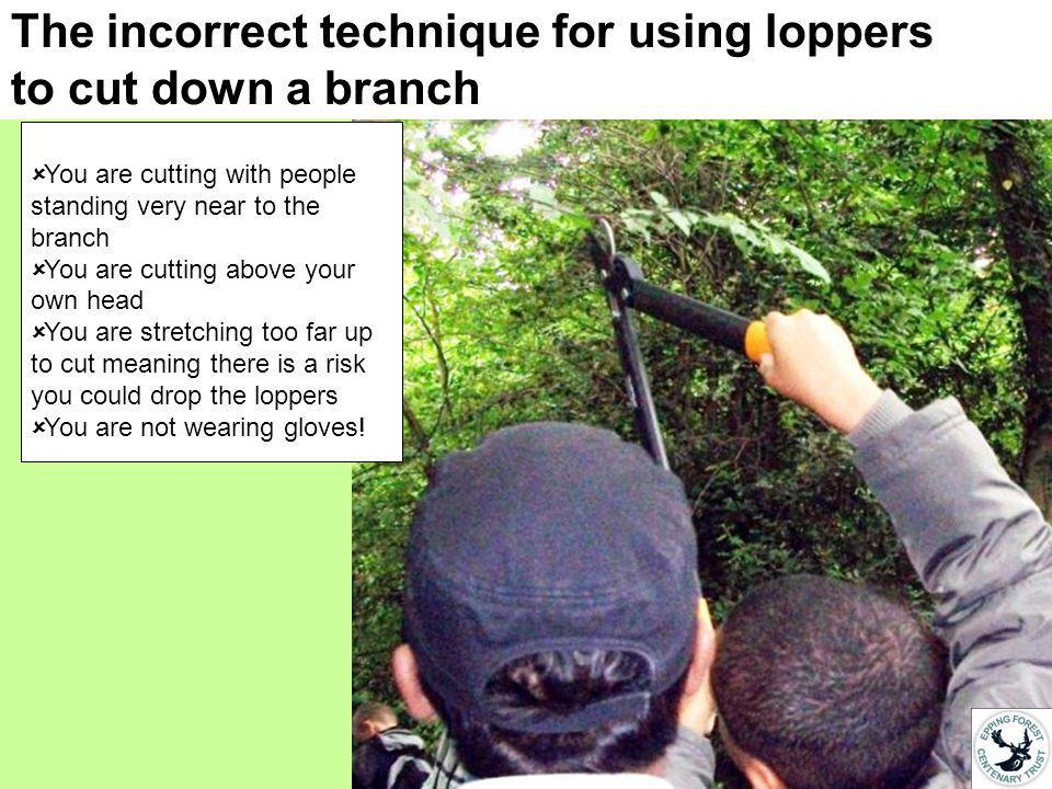 The incorrect technique for using loppers to cut down a branch You are cutting with people standing very near to the branch You are cutting above your own head You are stretching too far up to cut meaning there is a risk you could drop the loppers You are not wearing gloves!