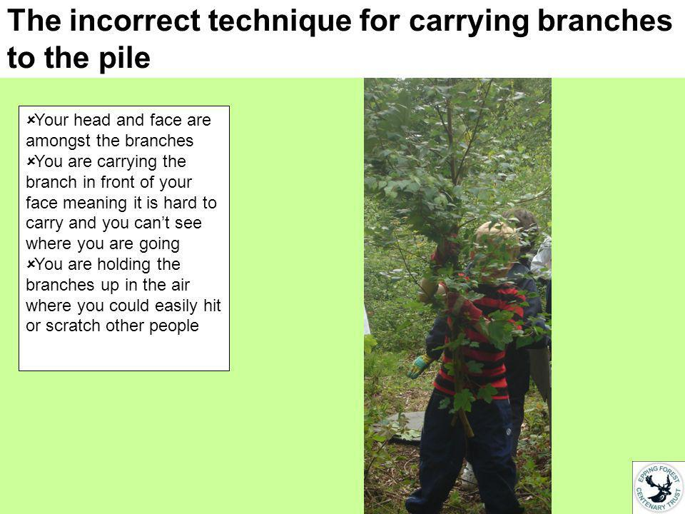 The incorrect technique for carrying branches to the pile Your head and face are amongst the branches You are carrying the branch in front of your face meaning it is hard to carry and you cant see where you are going You are holding the branches up in the air where you could easily hit or scratch other people
