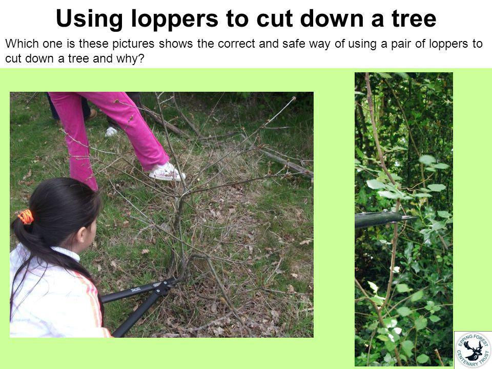 Using loppers to cut down a tree What is wrong in these pictures?