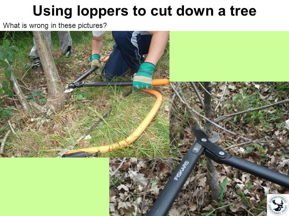 Using loppers to cut down a branch Which one is these pictures shows the correct and safe way of using a pair of loppers to cut down a branch and why?