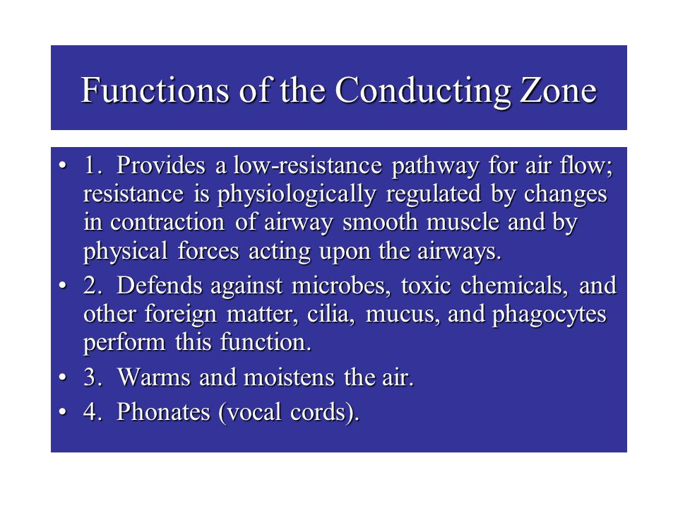 Functions of the Conducting Zone 1. Provides a low-resistance pathway for air flow; resistance is physiologically regulated by changes in contraction