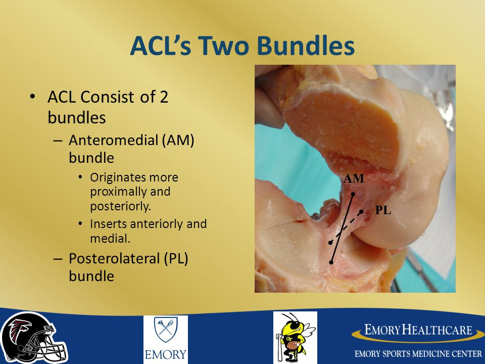 Two Bundles AM and PL bundle tension different depending on the position of the knee: – 90 o flexion: the AM bundle taut while the PL bundle relaxed.