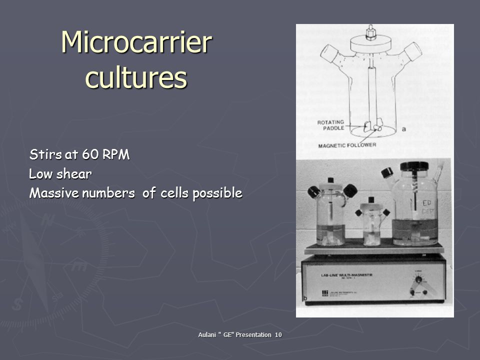 Aulani GE Presentation 10 Microcarrier cultures Stirs at 60 RPM Low shear Massive numbers of cells possible