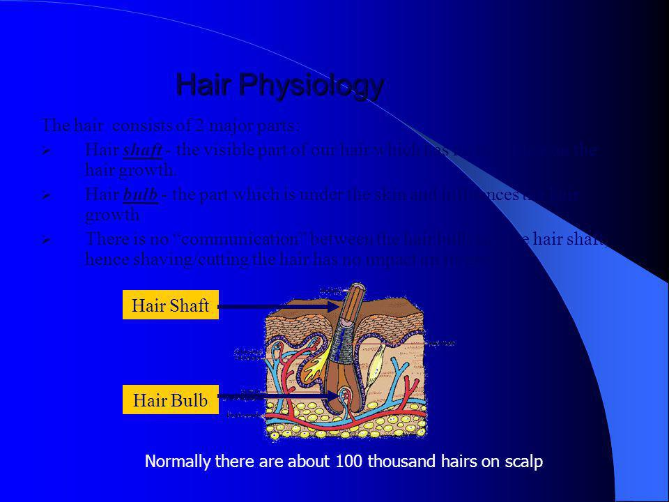 Hair Physiology The hair consists of 2 major parts: Hair shaft - the visible part of our hair which has no influence on the hair growth.