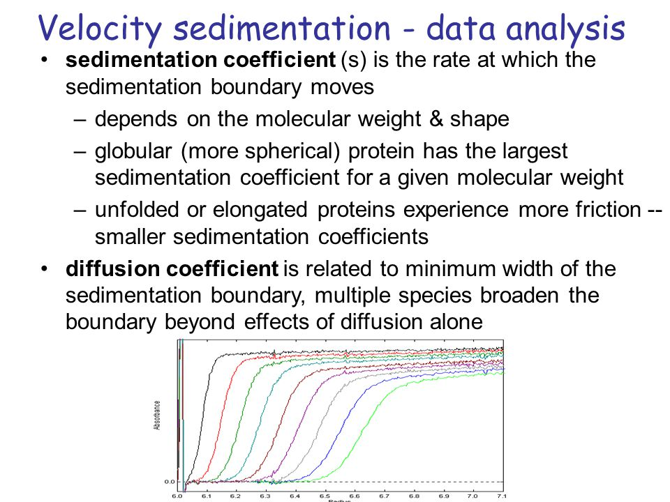 Velocity sedimentation - data analysis sedimentation coefficient (s) is the rate at which the sedimentation boundary moves –depends on the molecular weight & shape –globular (more spherical) protein has the largest sedimentation coefficient for a given molecular weight –unfolded or elongated proteins experience more friction -- smaller sedimentation coefficients diffusion coefficient is related to minimum width of the sedimentation boundary, multiple species broaden the boundary beyond effects of diffusion alone