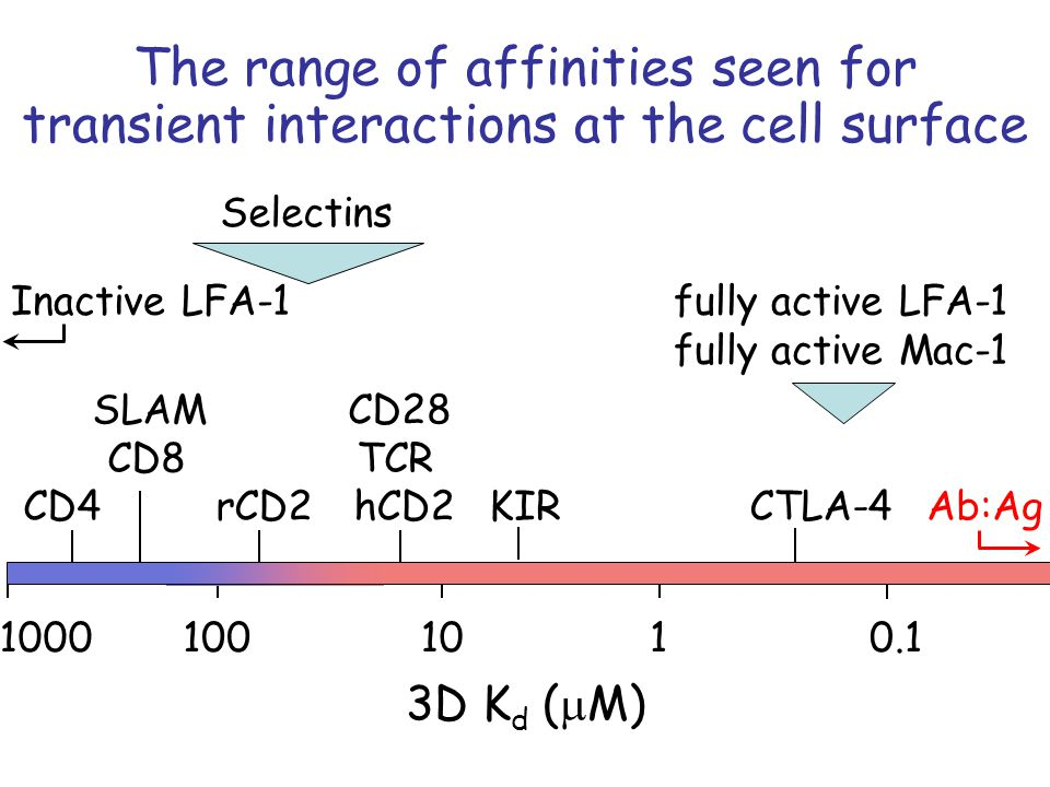 3D K d ( M) 1101000.11000 hCD2 TCR CD28 CTLA-4KIR CD8 SLAM CD4rCD2 The range of affinities seen for transient interactions at the cell surface Ab:Ag Inactive LFA-1fully active LFA-1 fully active Mac-1 Selectins