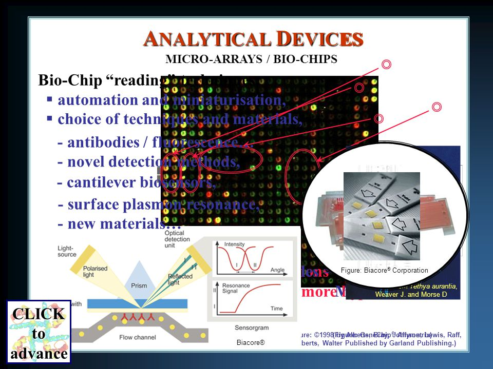 (Figure: ©1998 by Alberts, Bray, Johnson, Lewis, Raff, Roberts, Walter Published by Garland Publishing.) (Figure: GeneChip ® Affymetrix) Specific Analysis: Few Observations = more hypotheses Multi-Protein Analysis : More Variables = More DATA A NALYTICAL D EVICES MICRO-ARRAYS / BIO-CHIPS ES Bio-Chip reading techniques: choice of techniques and materials, automation and miniaturisation, - antibodies / fluorescence… - cantilever biosensors, Courtesy of Flavio Robles / PDB NanoReader TM BioForce NanoSciences Daniel T.