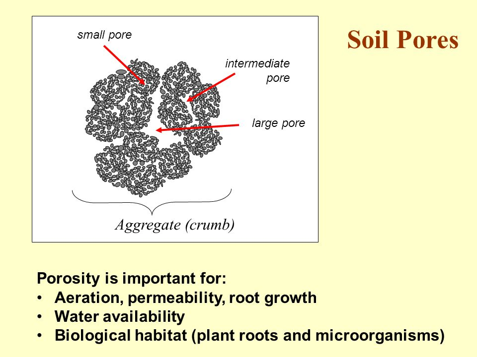 large pore intermediate pore small pore Aggregate (crumb) Porosity is important for: Aeration, permeability, root growth Water availability Biological