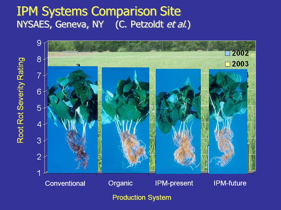 Conventional OrganicIPM-presentIPM-future Root Rot Severity Rating Production System IPM Systems Comparison Site NYSAES, Geneva, NY (C. Petzoldt et al