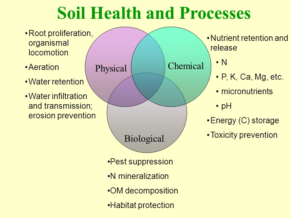 Soil Health and Processes Physical Chemical Biological Nutrient retention and release N P, K, Ca, Mg, etc. micronutrients pH Energy (C) storage Toxici