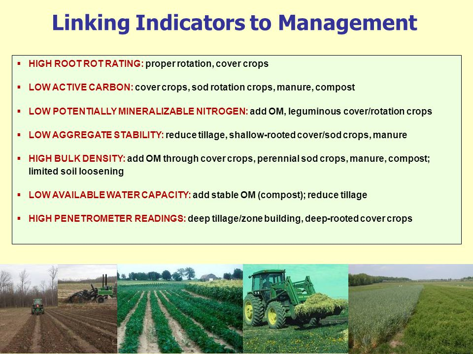 Linking Indicators to Management HIGH ROOT ROT RATING: proper rotation, cover crops LOW ACTIVE CARBON: cover crops, sod rotation crops, manure, compos