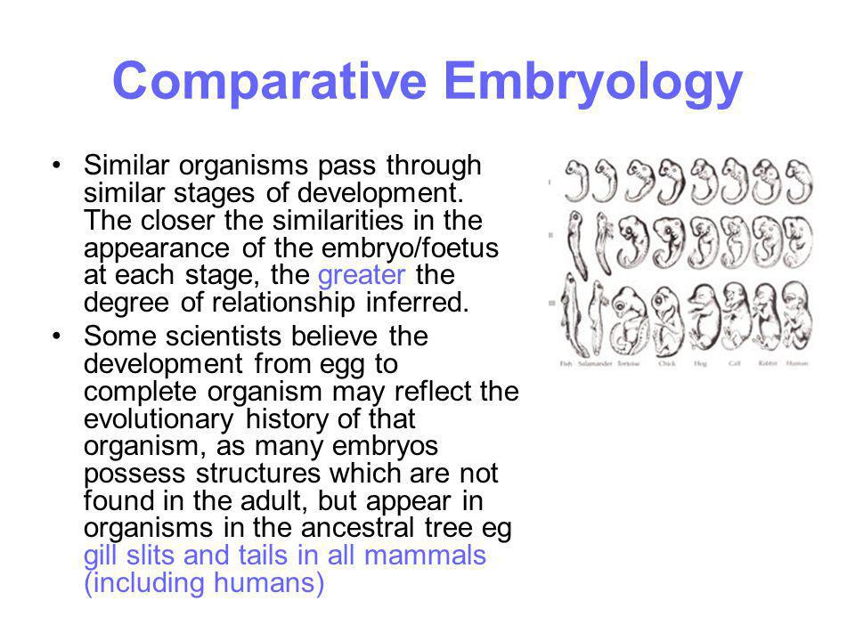 Comparative Embryology Similar organisms pass through similar stages of development. The closer the similarities in the appearance of the embryo/foetu