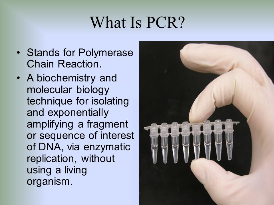 What Is PCR? Stands for Polymerase Chain Reaction. A biochemistry and molecular biology technique for isolating and exponentially amplifying a fragmen