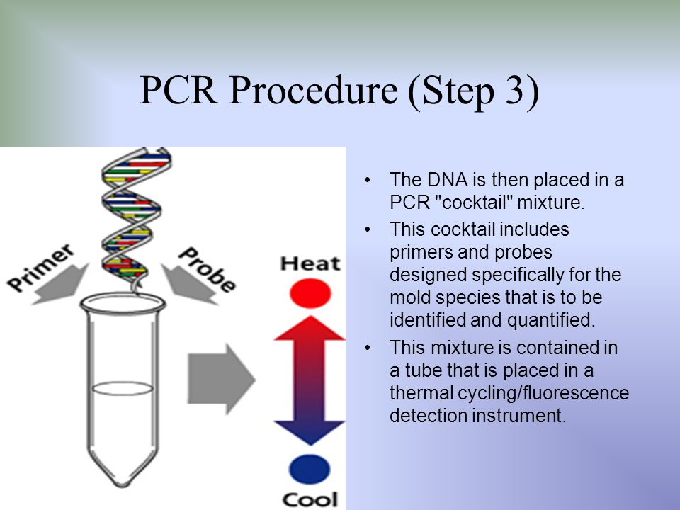 PCR Procedure (Step 3) The DNA is then placed in a PCR