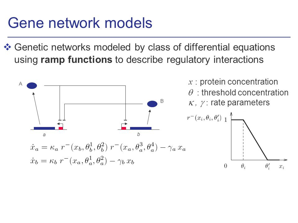 Gene network models vGenetic networks modeled by class of differential equations using ramp functions to describe regulatory interactions b B a A x : protein concentration, : rate parameters : threshold concentration