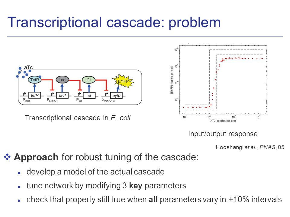 Transcriptional cascade: problem vApproach for robust tuning of the cascade: l develop a model of the actual cascade l tune network by modifying 3 key parameters l check that property still true when all parameters vary in ±10% intervals Hooshangi et al., PNAS, 05 Input/output response Transcriptional cascade in E.