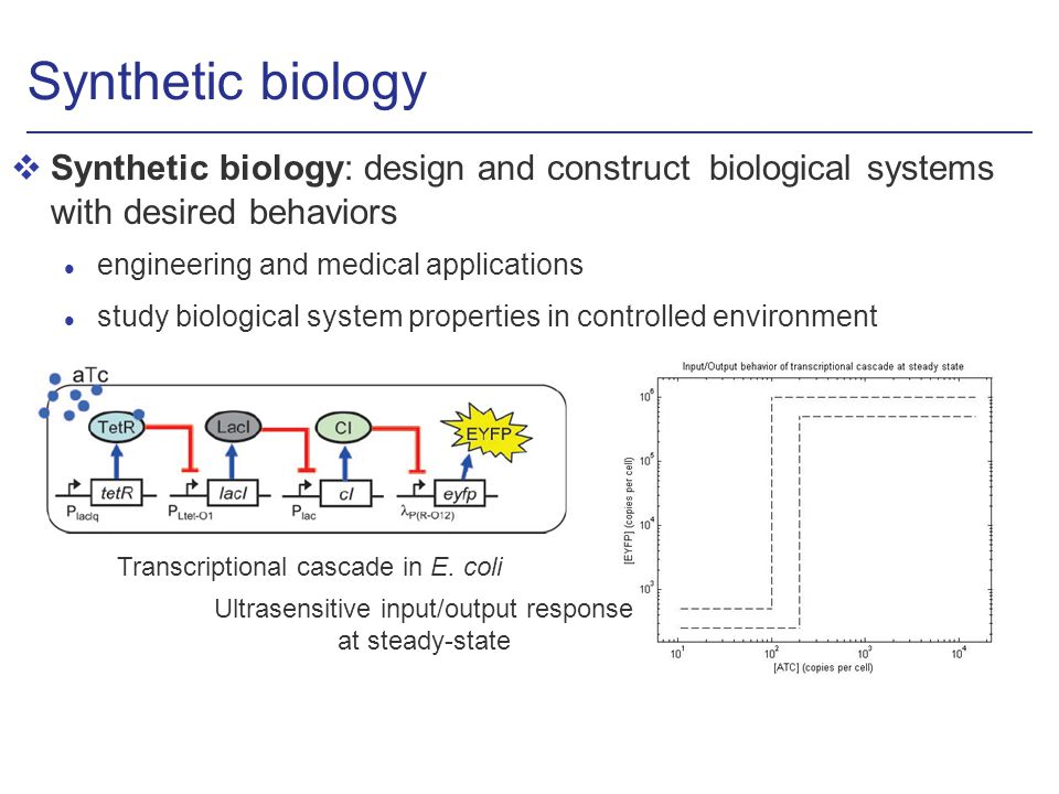 Synthetic biology vSynthetic biology: design and construct biological systems with desired behaviors l engineering and medical applications l study biological system properties in controlled environment Ultrasensitive input/output response at steady-state Transcriptional cascade in E.
