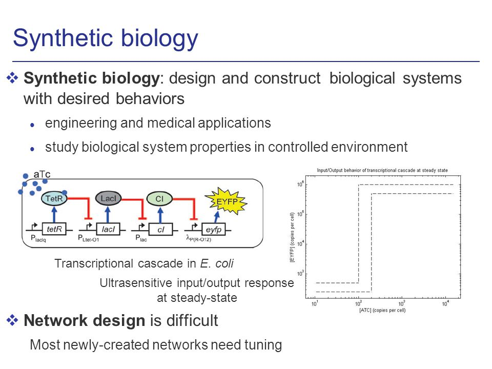 Synthetic biology vSynthetic biology: design and construct biological systems with desired behaviors l engineering and medical applications l study biological system properties in controlled environment vNetwork design is difficult Most newly-created networks need tuning Ultrasensitive input/output response at steady-state Transcriptional cascade in E.