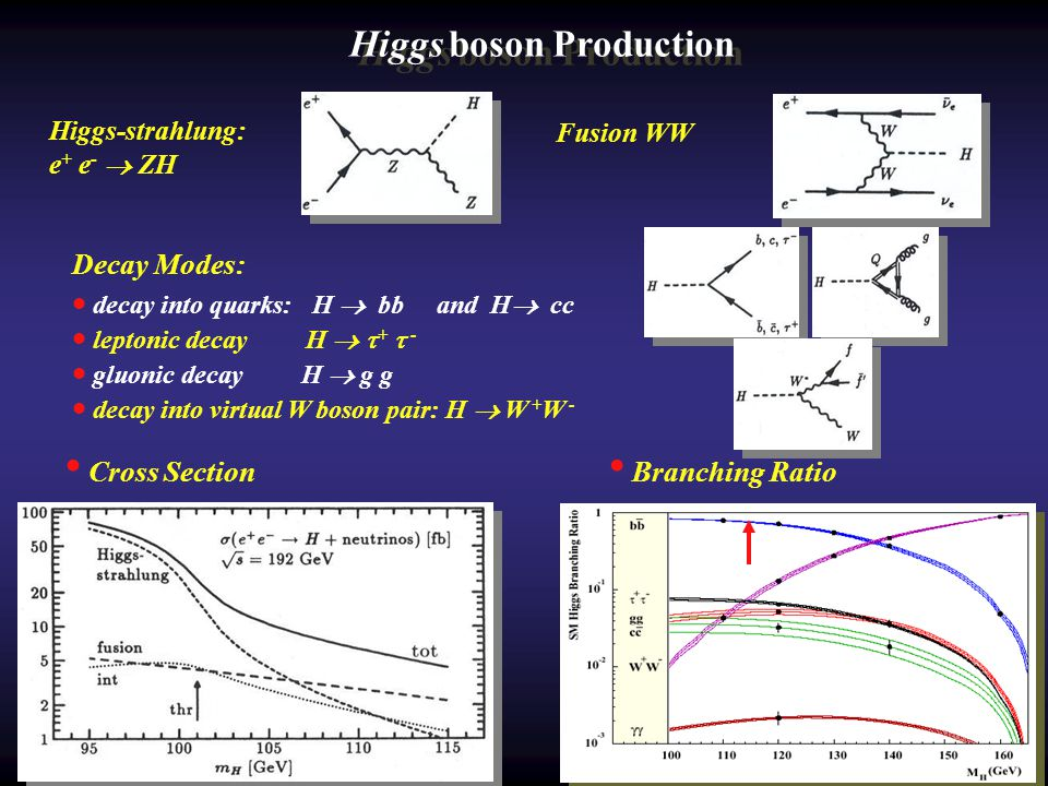 Higgs boson Production Decay Modes: decay into quarks: H bb and H cc leptonic decay H + - gluonic decay H g g decay into virtual W boson pair: H W + W - Higgs-strahlung: e + e - ZH Fusion WW Cross Section Branching Ratio