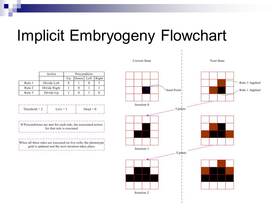 Implicit Embryogeny Flowchart