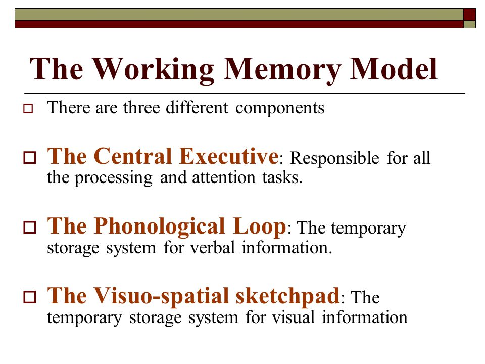 The Working Memory Model There are three different components The Central Executive : Responsible for all the processing and attention tasks. The Phon
