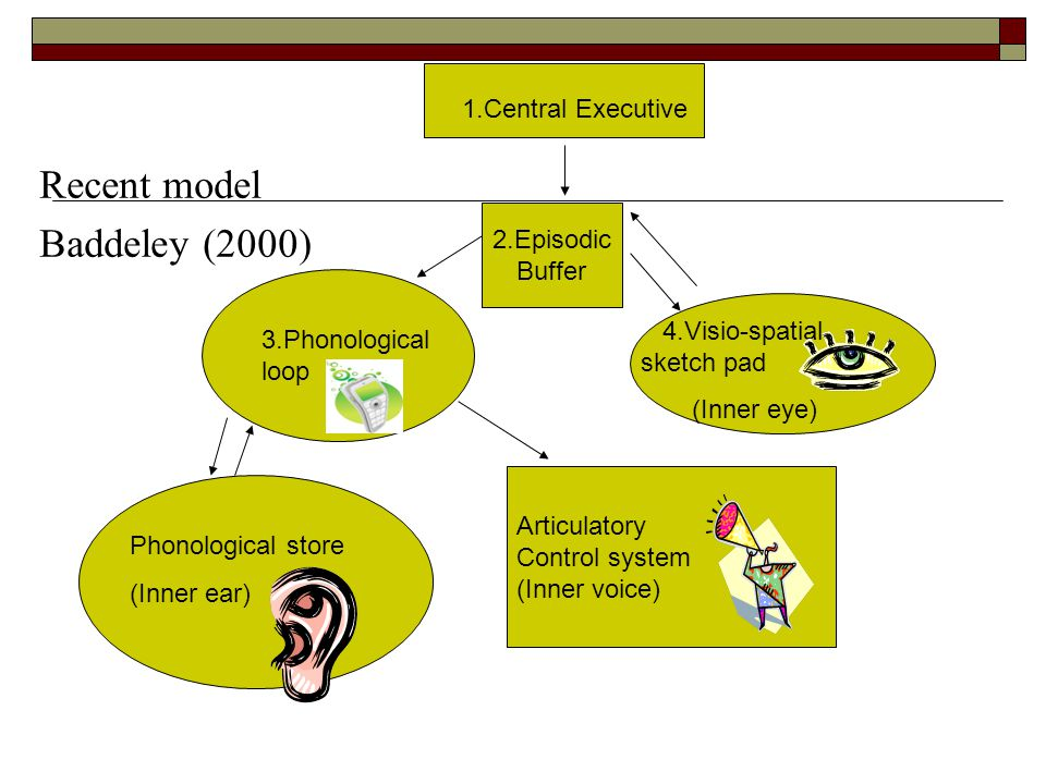 Recent model Baddeley (2000) Phonological store (Inner ear) Articulatory Control system (Inner voice) 1.Central Executive 4.Visio-spatial sketch pad (