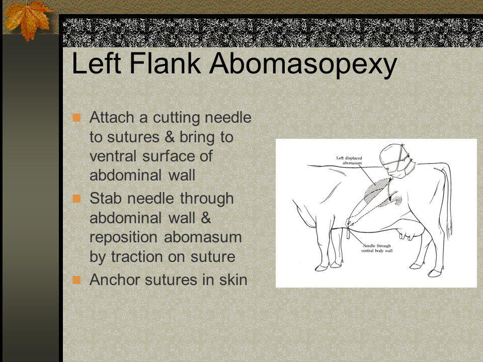 Left Flank Abomasopexy Attach a cutting needle to sutures & bring to ventral surface of abdominal wall Stab needle through abdominal wall & reposition