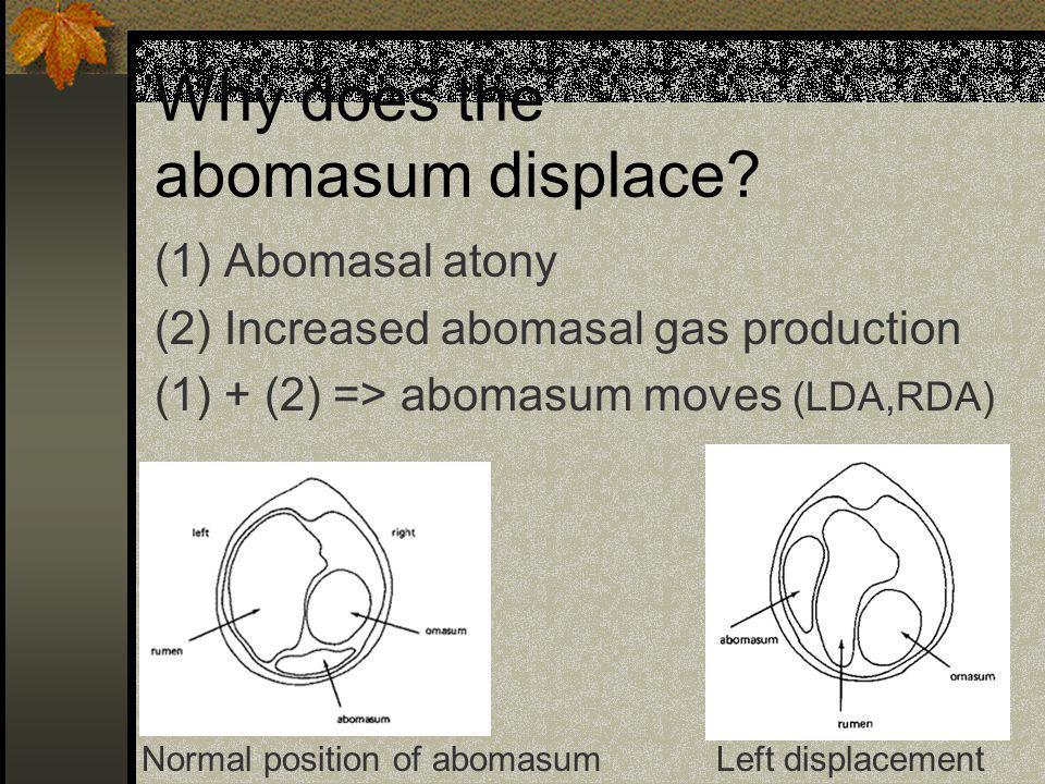 Why does the abomasum displace? (1) Abomasal atony (2) Increased abomasal gas production (1) + (2) => abomasum moves (LDA,RDA) Normal position of abom