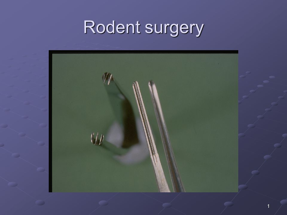 1 Rodent surgery