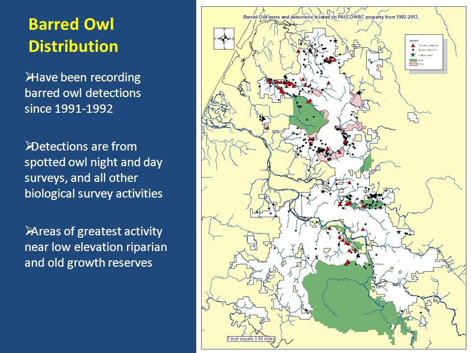 Barred Owl Distribution Have been recording barred owl detections since 1991-1992 Detections are from spotted owl night and day surveys, and all other biological survey activities Areas of greatest activity near low elevation riparian and old growth reserves