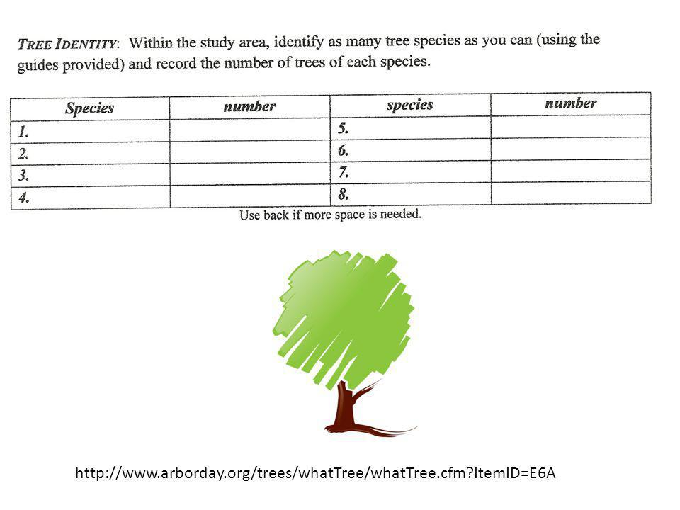 http://www.arborday.org/trees/whatTree/whatTree.cfm ItemID=E6A