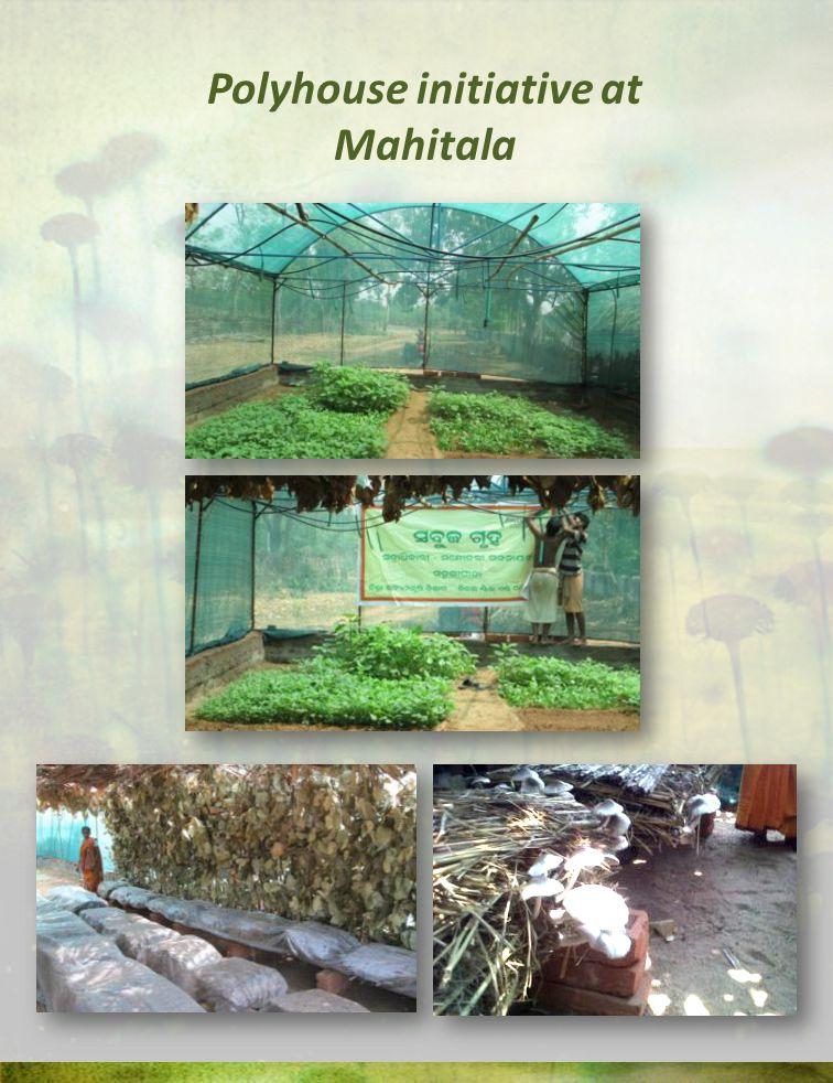 Polyhouse initiative at Mahitala