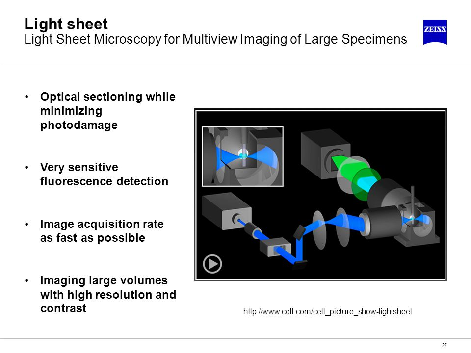 27 Light sheet Light Sheet Microscopy for Multiview Imaging of Large Specimens Optical sectioning while minimizing photodamage Very sensitive fluoresc