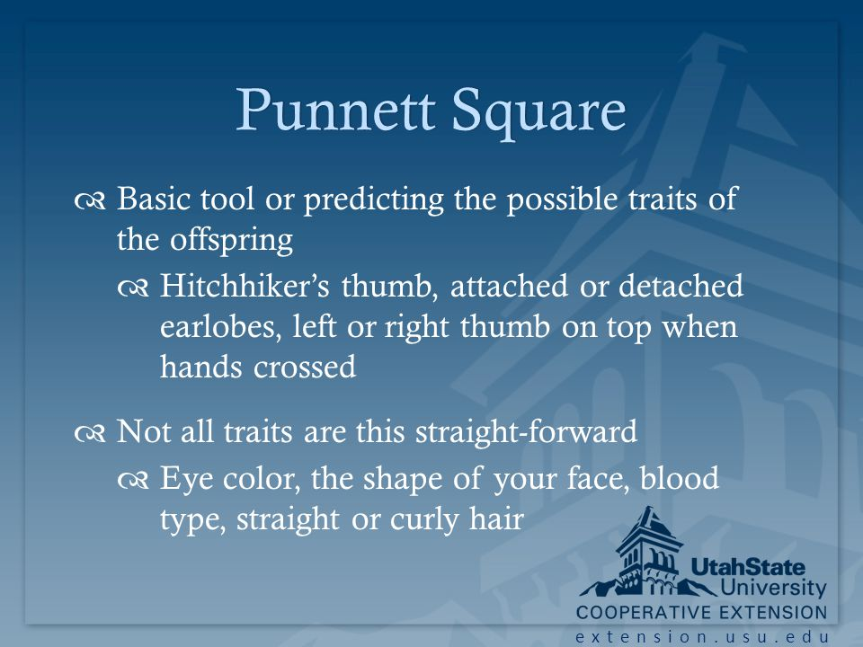 Punnett SquarePunnett Square Basic tool or predicting the possible traits of the offspring Hitchhikers thumb, attached or detached earlobes, left or right thumb on top when hands crossed Not all traits are this straight-forward Eye color, the shape of your face, blood type, straight or curly hair