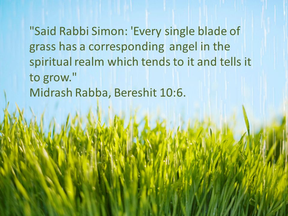 Said Rabbi Simon: Every single blade of grass has a corresponding angel in the spiritual realm which tends to it and tells it to grow. Midrash Rabba, Bereshit 10:6.