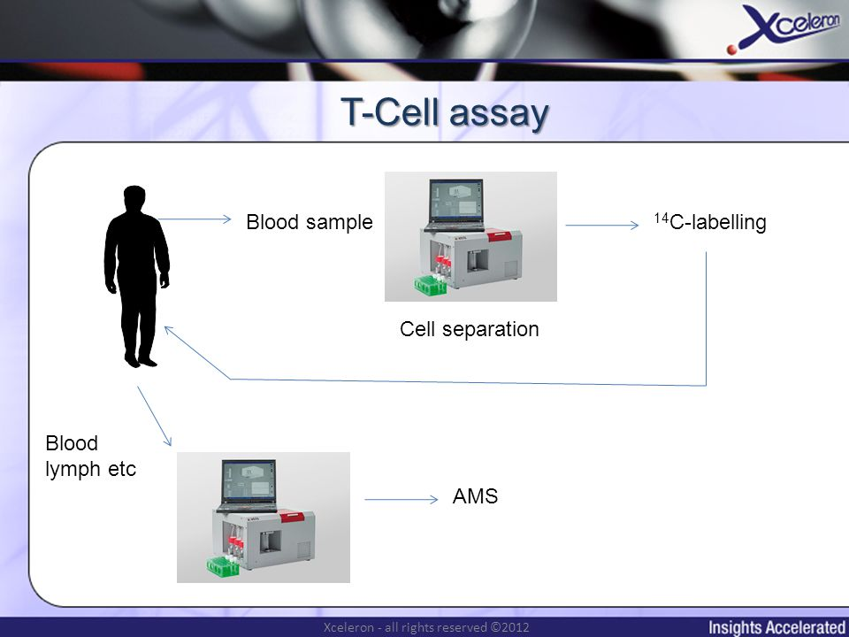 Xceleron - all rights reserved ©2012 T-Cell assay Blood sample Cell separation 14 C-labelling AMS Blood lymph etc