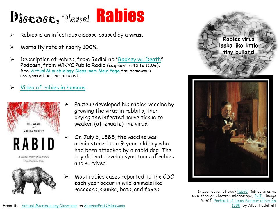 Rabies is an infectious disease caused by a virus. Mortality rate of nearly 100%. Description of rabies, from RadioLab Rodney vs. Death Podcast, from