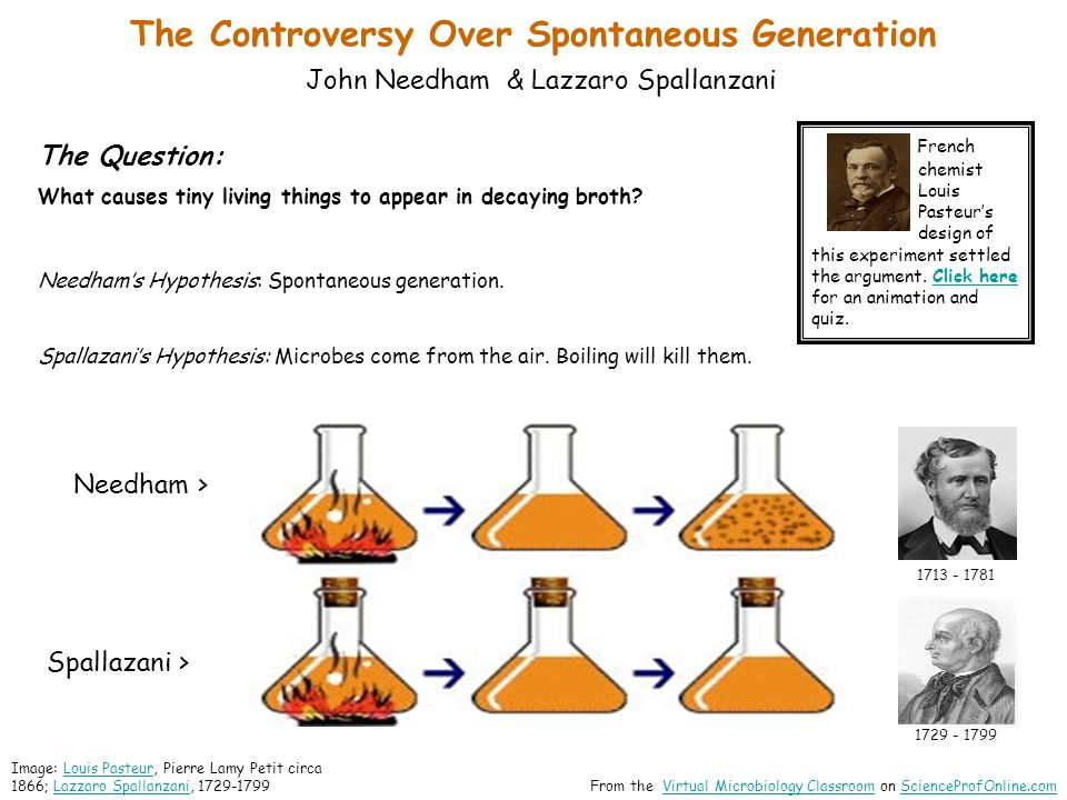 The Controversy Over Spontaneous Generation Louis Pasteur & Industrial Microbiology - Q: What is fermentation.