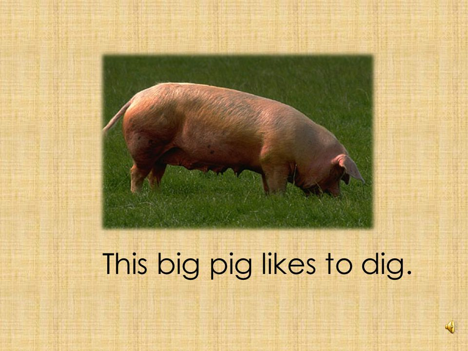I see a pig in a rig.
