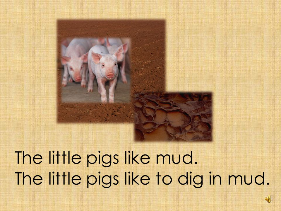 The little pigs want to dig.