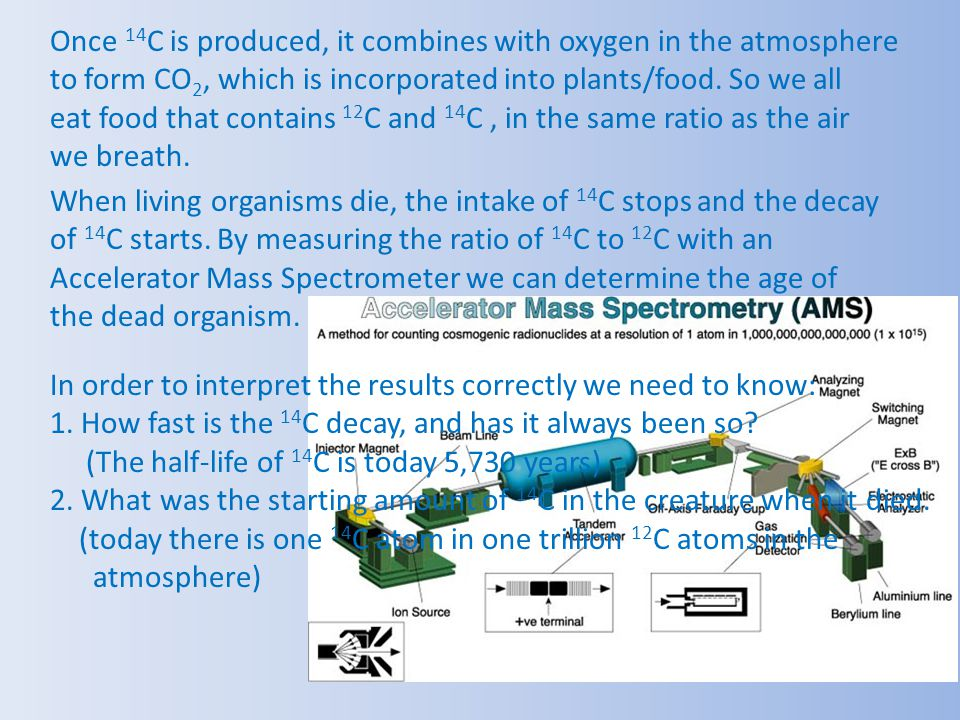 Once 14 C is produced, it combines with oxygen in the atmosphere to form CO 2, which is incorporated into plants/food. So we all eat food that contain