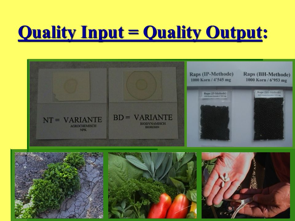 Quality Input = Quality Output: