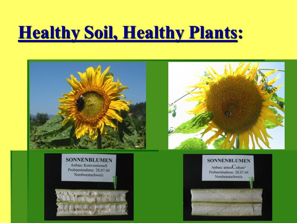 Healthy Soil, Healthy Plants: