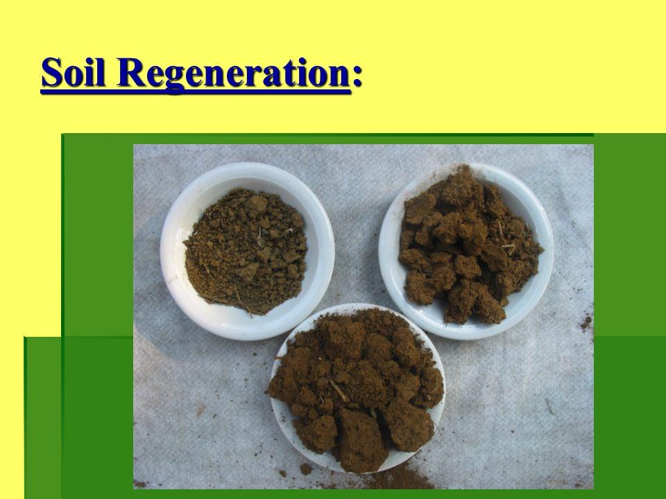 Soil Regeneration: