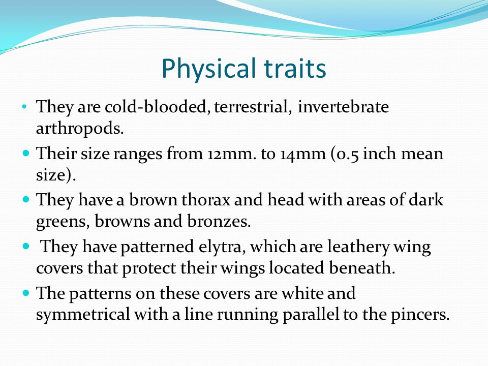 Physical traits They are cold-blooded, terrestrial, invertebrate arthropods.