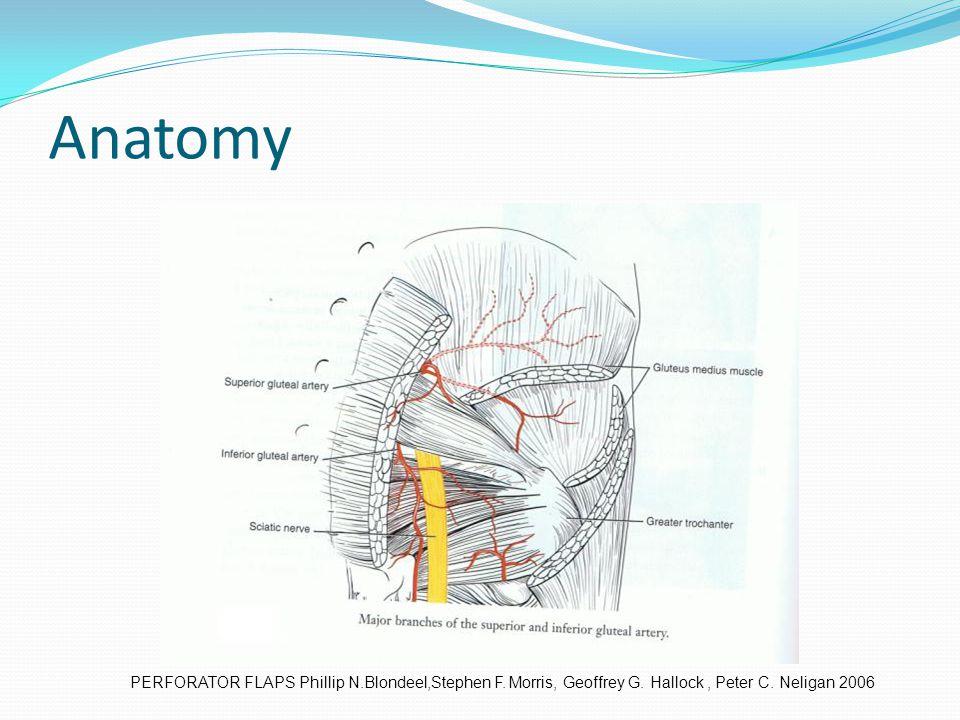 Anatomy PERFORATOR FLAPS Phillip N.Blondeel,Stephen F. Morris, Geoffrey G. Hallock, Peter C. Neligan 2006
